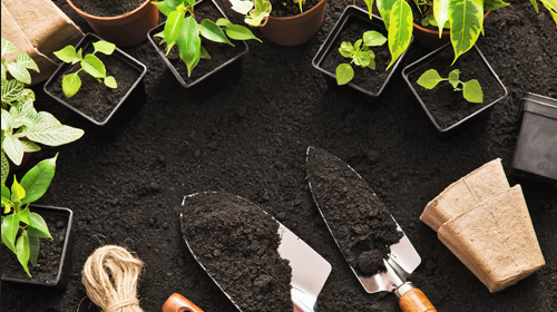 How Gardening Can Nurture Your Mental Health